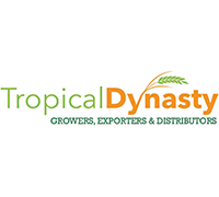 Tropical Dynasty