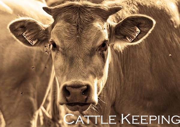 Cattle Keeping